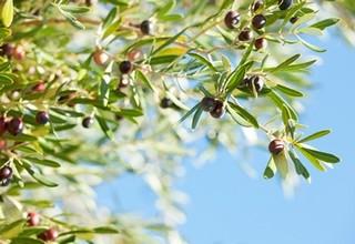 FINACTU remporte l'appel d'offres lancé par le Ministère de l'Agriculture du Maroc pour la création de la première assurance agricole indicielle du Royaume